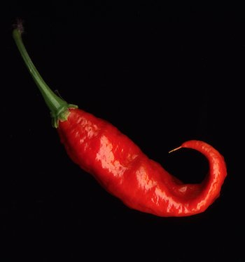 Ghost chili pepper bhut jolokia
